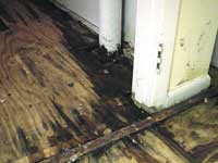 black mold south jersey